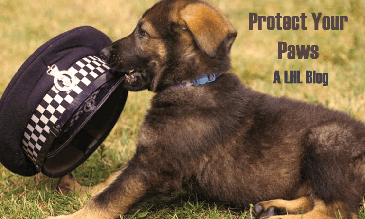 Protect Your Paws